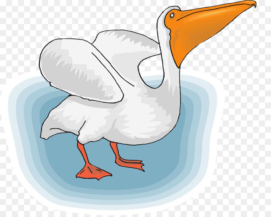 Descarga gratuita de Pájaro, Pelican, De Aves Marinas Imágen de Png