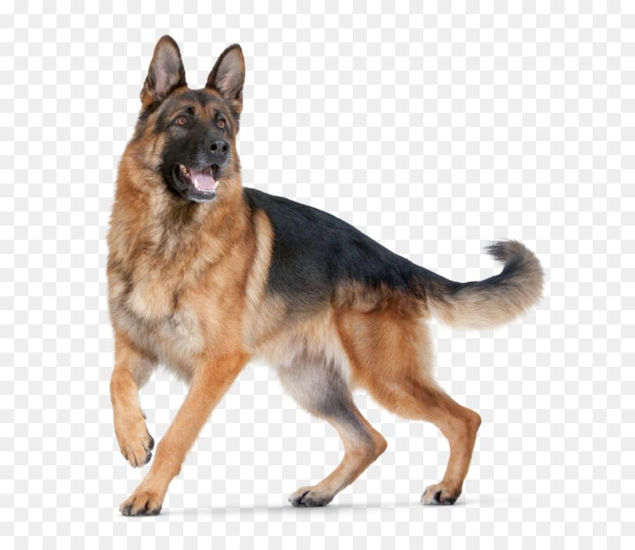Descarga gratuita de Pastor Alemán, Cachorro, Perro De Raza Pura imágenes PNG