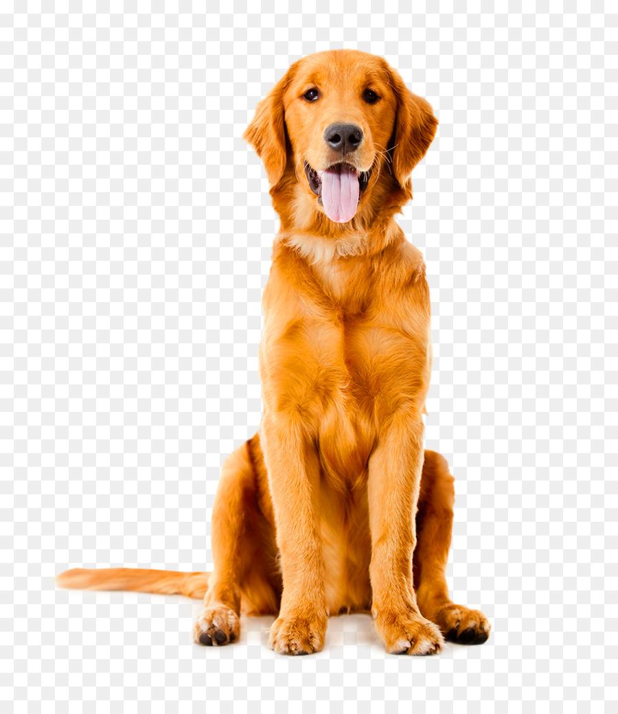 Descarga gratuita de Labrador Retriever, Golden Retriever, Pastor Alemán Imágen de Png
