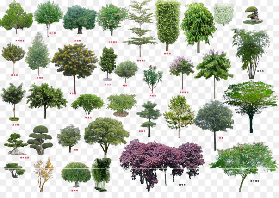 Descarga gratuita de árbol, Descargar, Arbusto imágenes PNG