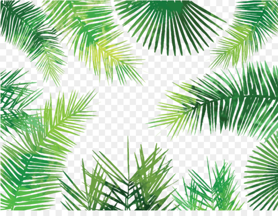 Descarga gratuita de Asiático Palmira Palma, Arecaceae, Hoja Imágen de Png