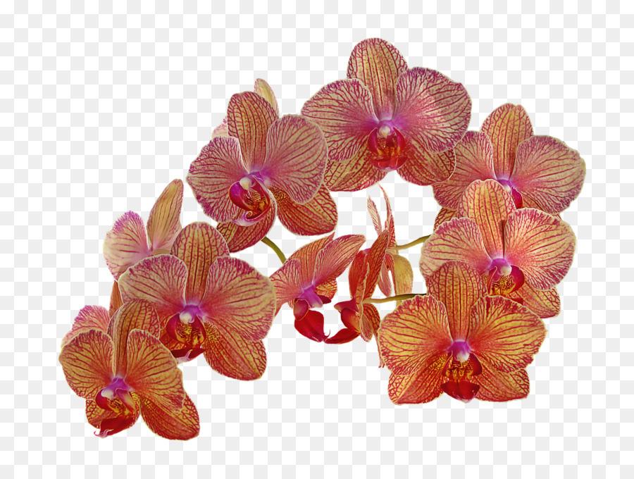 Descarga gratuita de Flor, Las Orquídeas, Naranja imágenes PNG