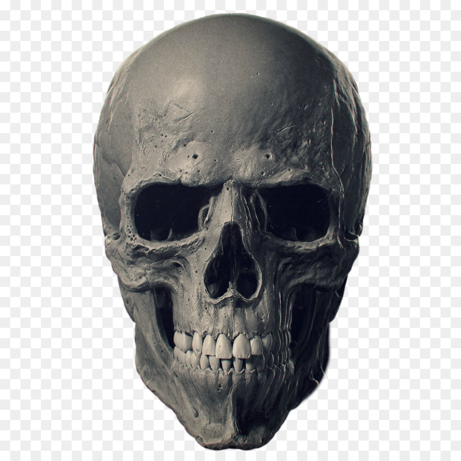 Descarga gratuita de Los Cráneos De Los Animales, Hueso, Esqueleto Humano Imágen de Png