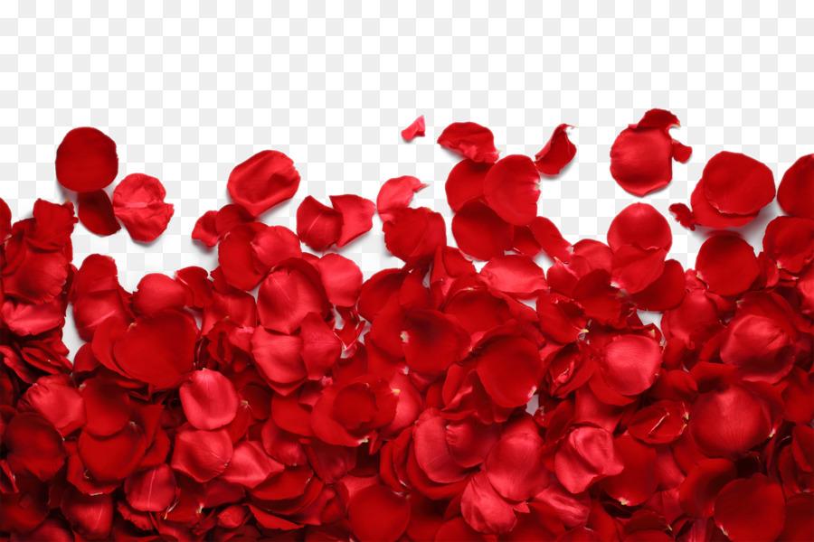 Descarga gratuita de Pétalo, Rosa, Las Rosas De Jardín imágenes PNG