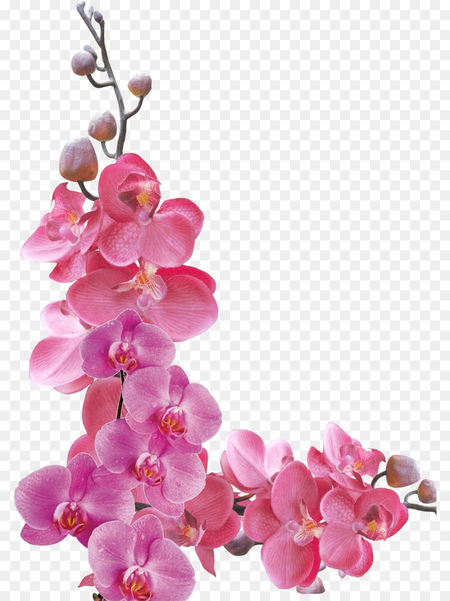 Descarga gratuita de Flor, Las Orquídeas, Pétalo imágenes PNG