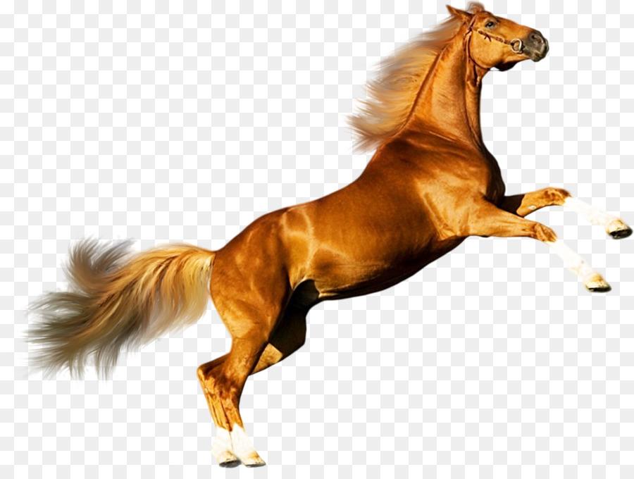 Descarga gratuita de Mustang, Caballo Andaluz, Caballo árabe Imágen de Png