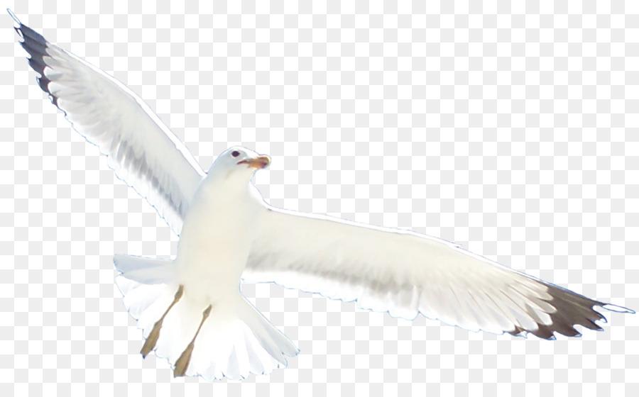 Descarga gratuita de Pájaro, Las Gaviotas, Europea De La Gaviota Imágen de Png