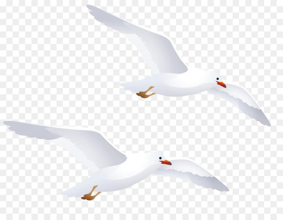 Descarga gratuita de Pájaro, Europea De La Gaviota, Las Gaviotas Imágen de Png