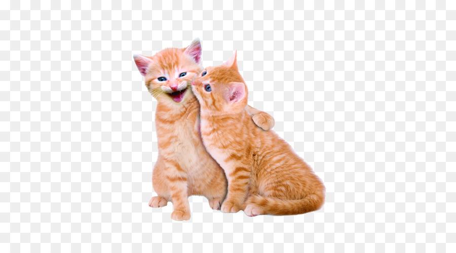 Descarga gratuita de Gato, Gatito, Perro Imágen de Png