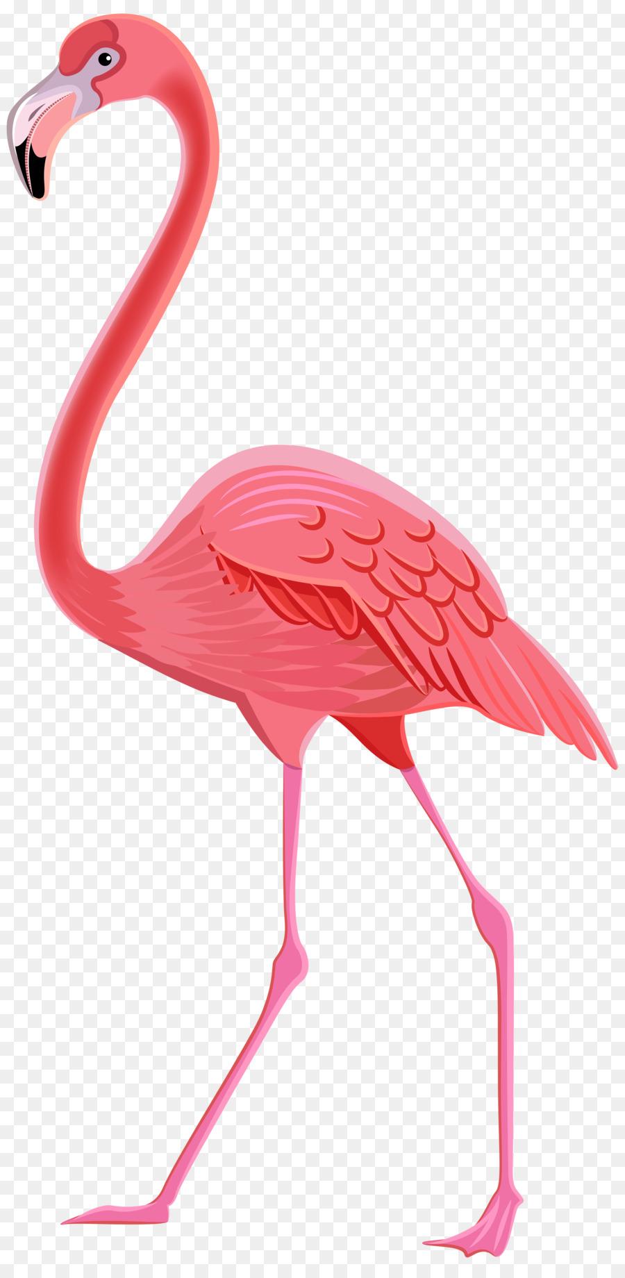 Descarga gratuita de Flamingo, Dibujo, Postscript Encapsulado Imágen de Png