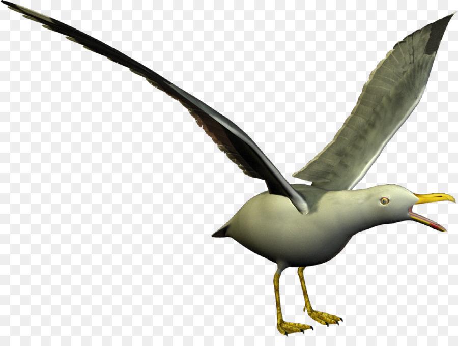 Descarga gratuita de Europea De La Gaviota, Las Gaviotas, Pájaro Imágen de Png
