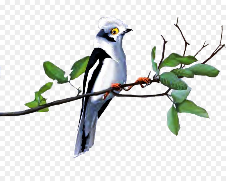 Descarga gratuita de Pájaro, Ganso, Una Fotografía De Stock Imágen de Png