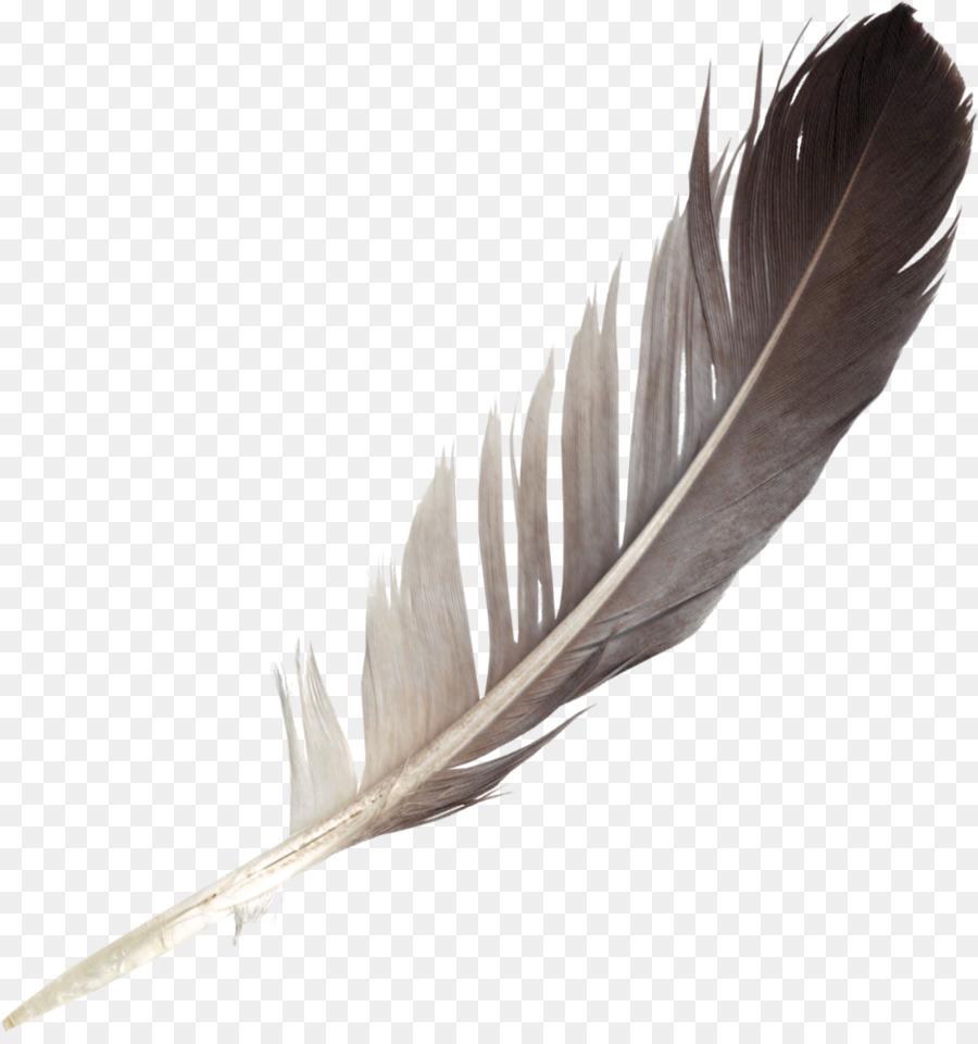Descarga gratuita de Pluma, Pájaro, Ala Imágen de Png