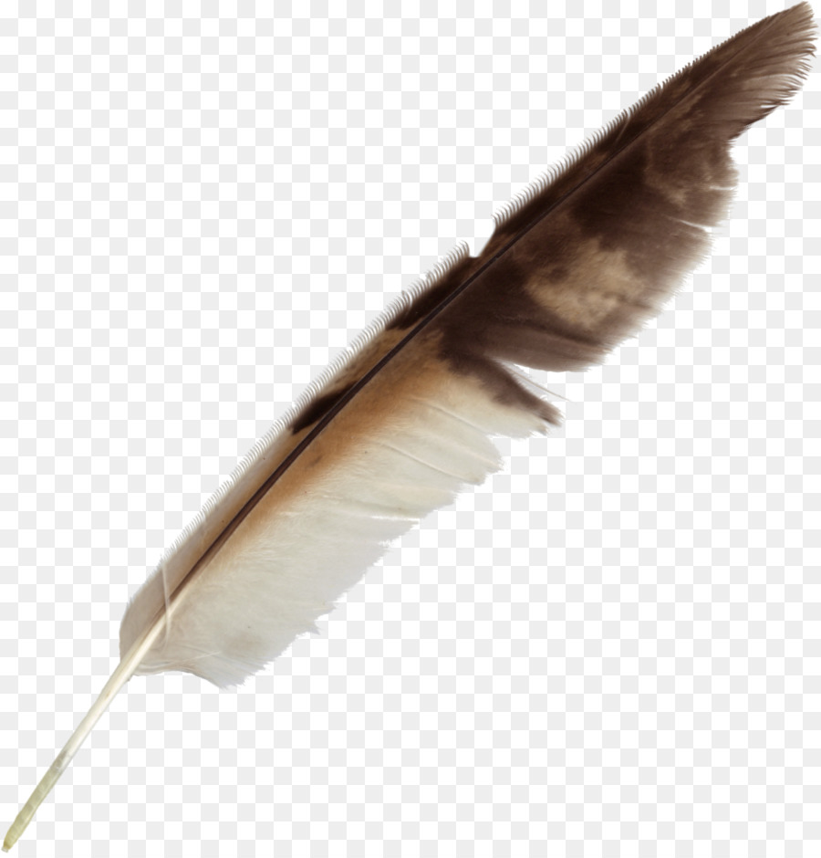 Descarga gratuita de Pluma, Pájaro, Lápiz Imágen de Png