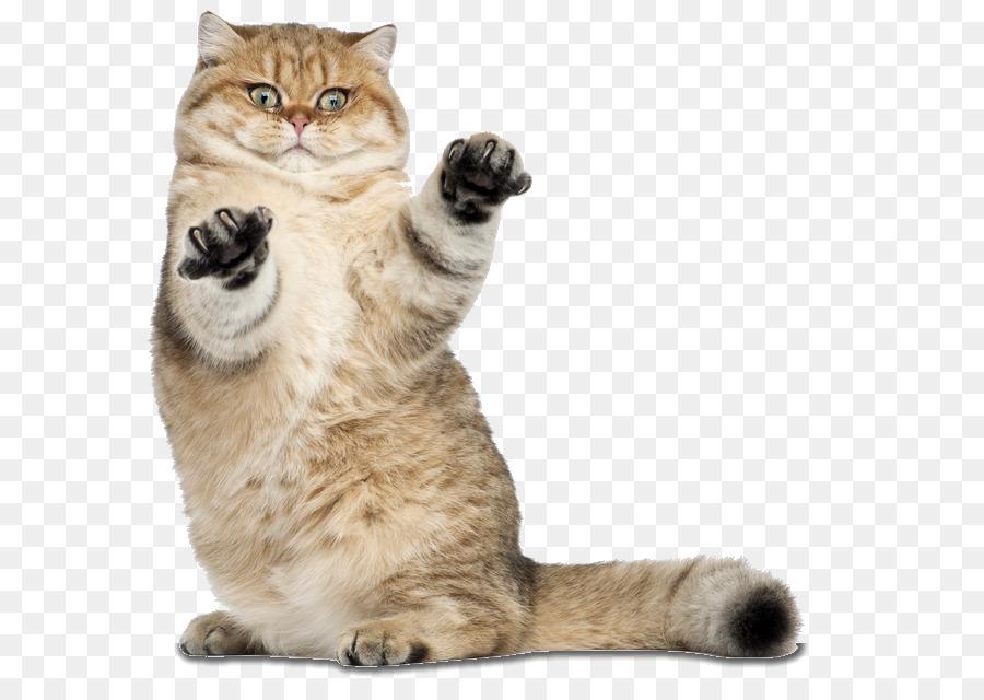 Descarga gratuita de Gato, Ratón, Perro Imágen de Png