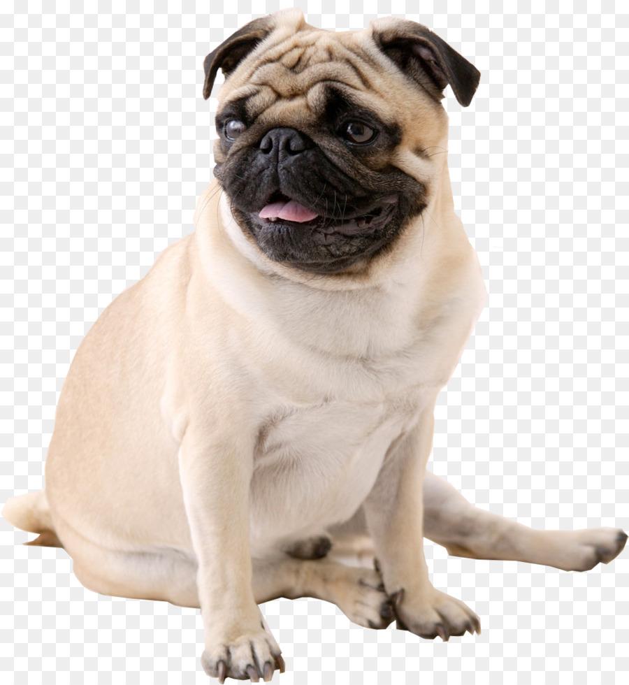 Descarga gratuita de Pug, Cachorro, La Televisión De Alta Definición imágenes PNG