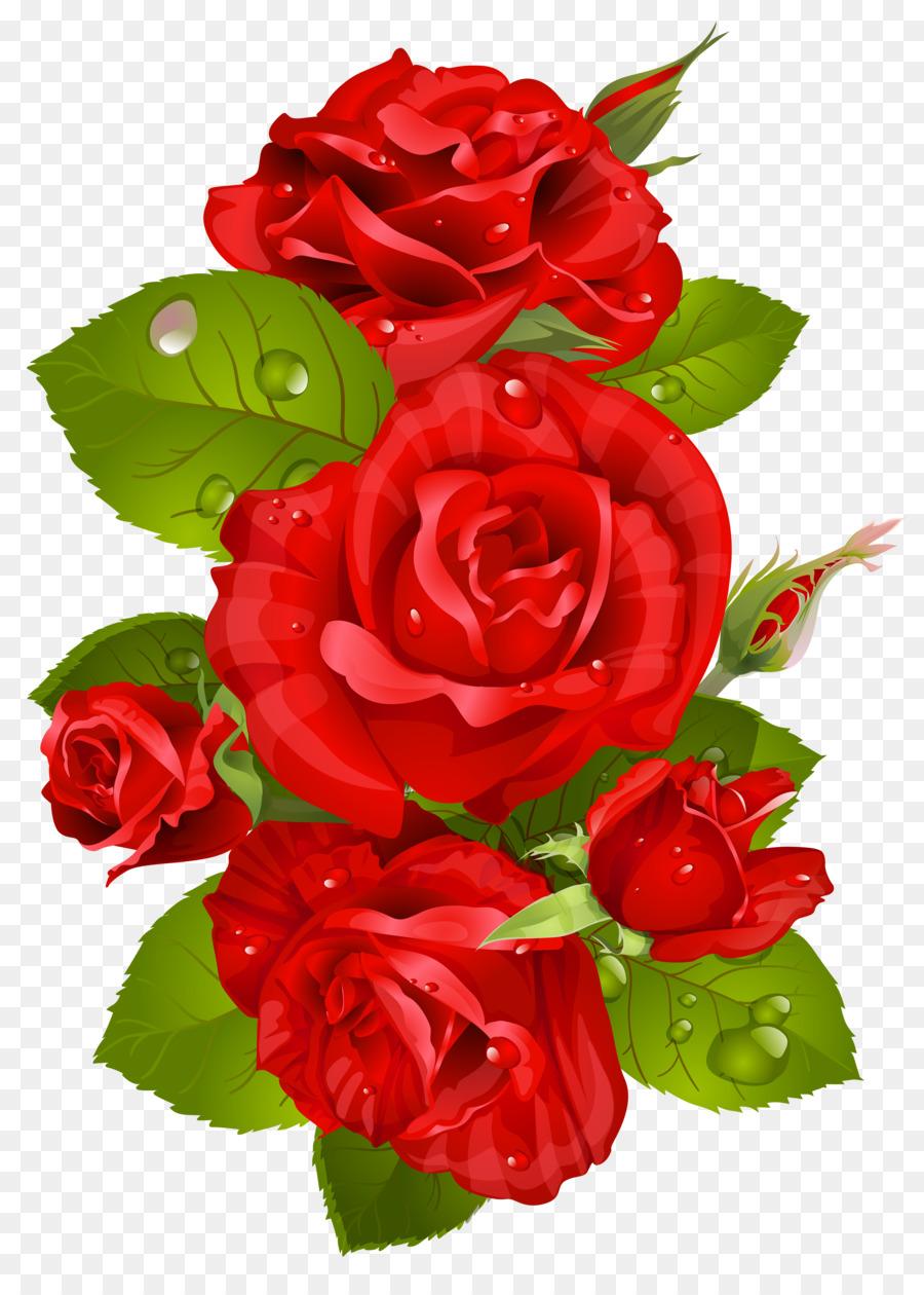 Descarga gratuita de Rosa, Flor, Rojo Imágen de Png