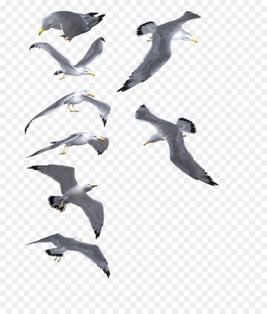 Descarga gratuita de Las Gaviotas, Pájaro, Descargar Imágen de Png