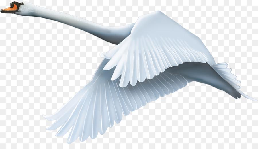 Descarga gratuita de Pájaro, Cisne Negro, Descargar Imágen de Png
