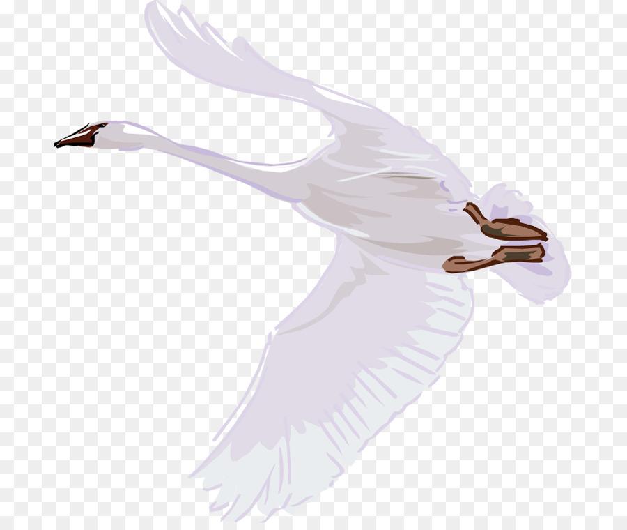 Descarga gratuita de Cisne, Pájaro, Cygnini Imágen de Png