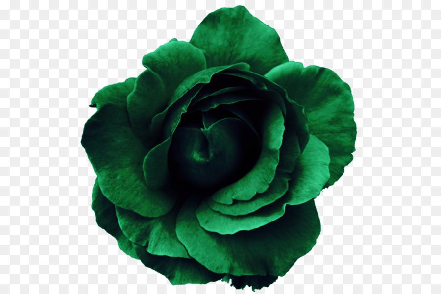 Descarga gratuita de Flor, Rosa, Flores De Color Rosa Imágen de Png