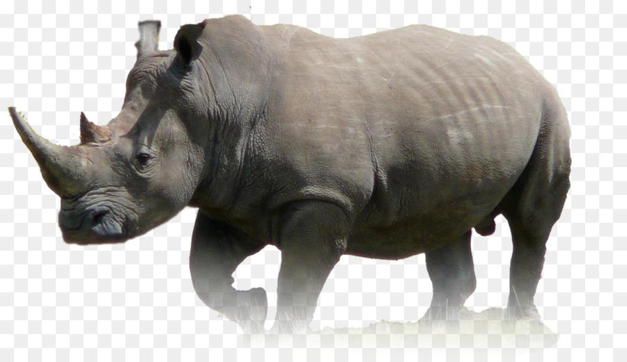 Descarga gratuita de El Rinoceronte, Javan Rinoceronte, Animal imágenes PNG