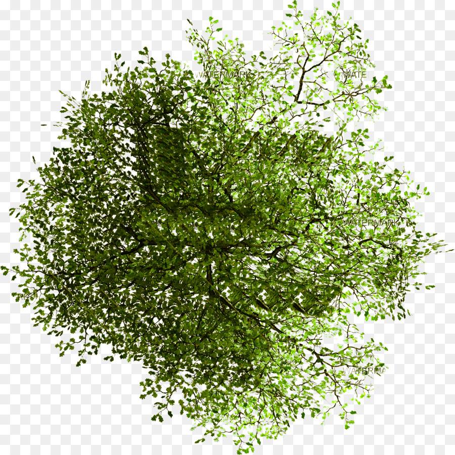 Descarga gratuita de árbol, Plan De Sitio, La Arquitectura imágenes PNG