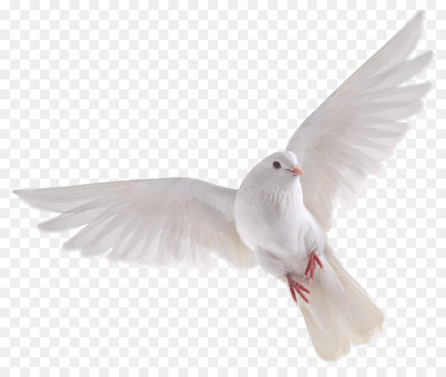 Descarga gratuita de Pájaro, Grey, Información Imágen de Png