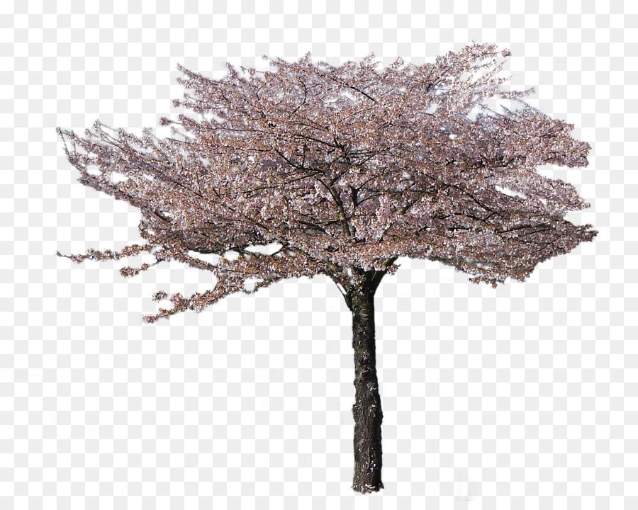 Descarga gratuita de De Los Cerezos En Flor, Flor, Rama imágenes PNG