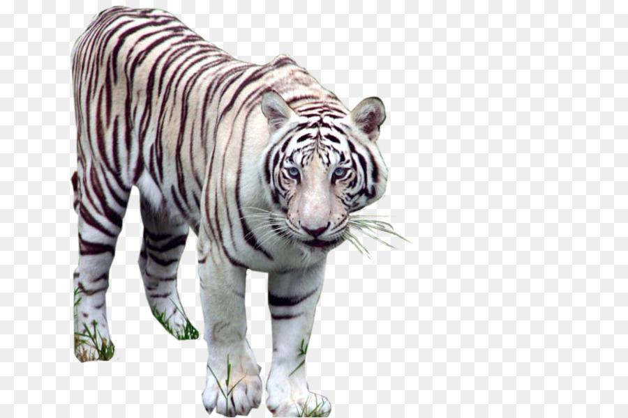 Descarga gratuita de Los Animales De Aprendizaje De Vocabulario, Inglés Animales, Android Imágen de Png