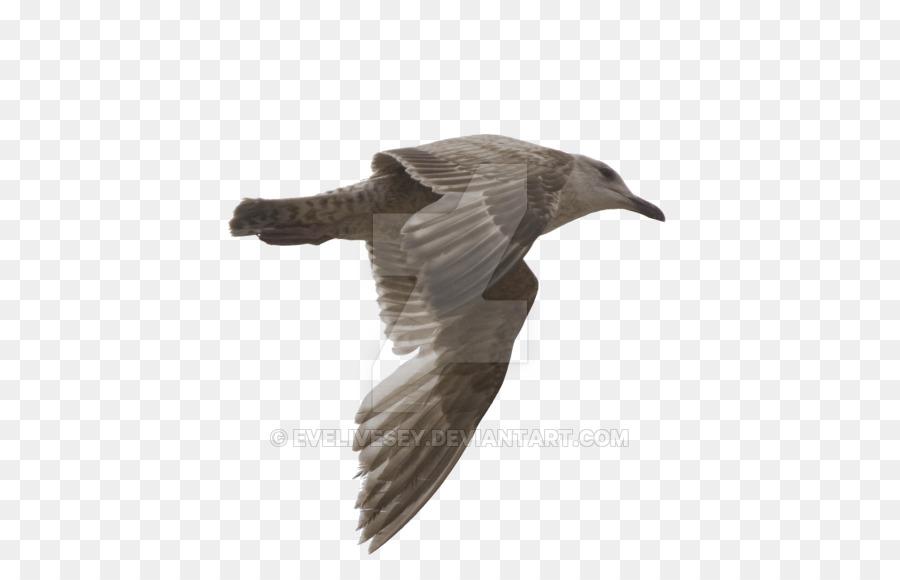 Descarga gratuita de Las Gaviotas, Pájaro, Deviantart Imágen de Png