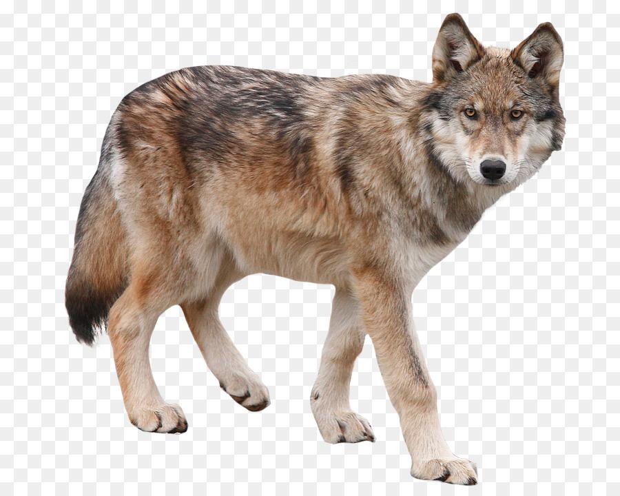 Descarga gratuita de Perro, Yukon Lobo, El Lobo ártico imágenes PNG