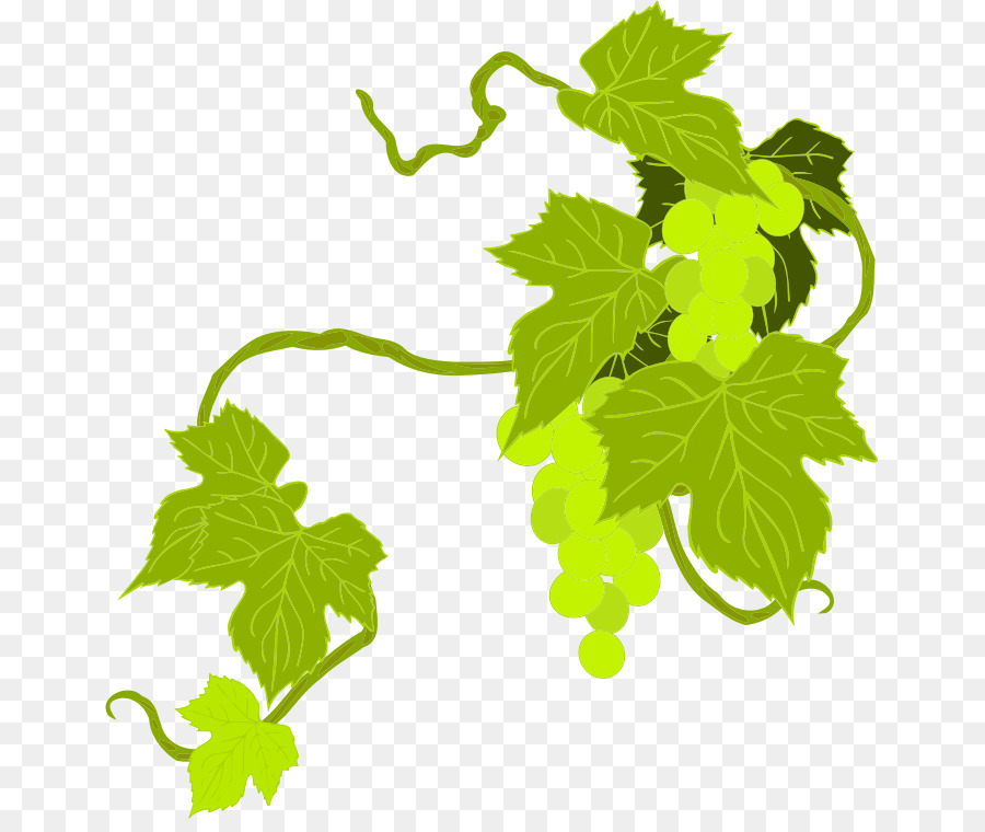 Descarga gratuita de Común De La Uva De La Vid, Vino, Uva Imágen de Png