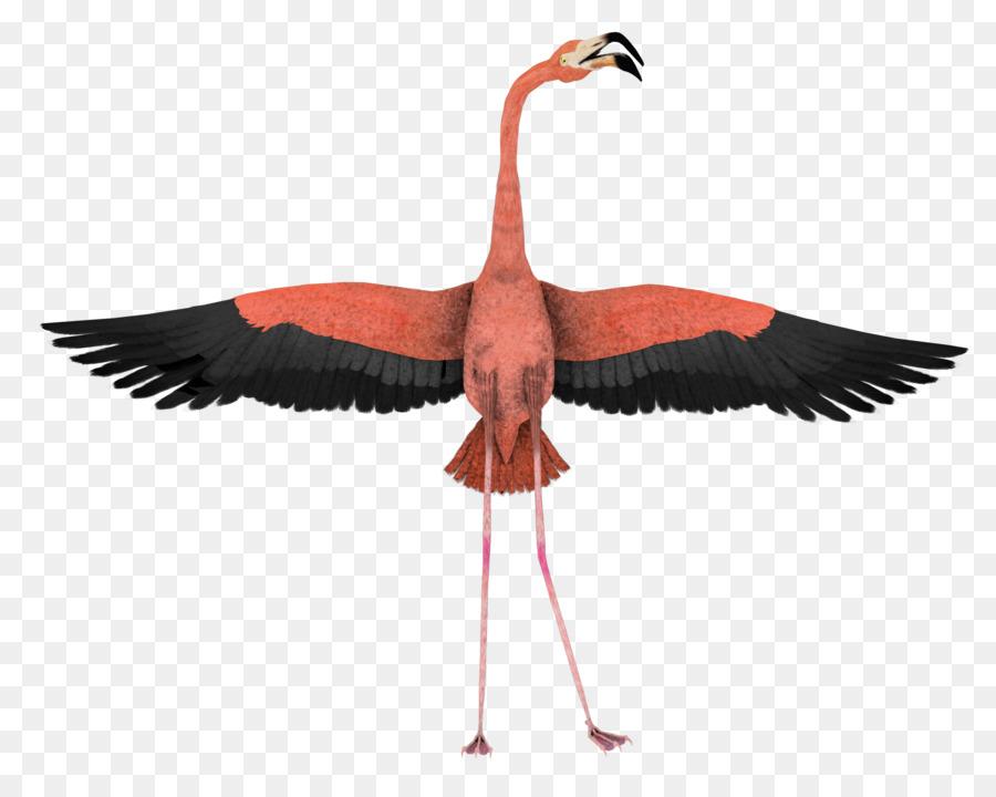 Descarga gratuita de Pájaro, Flamingo, Ala Imágen de Png
