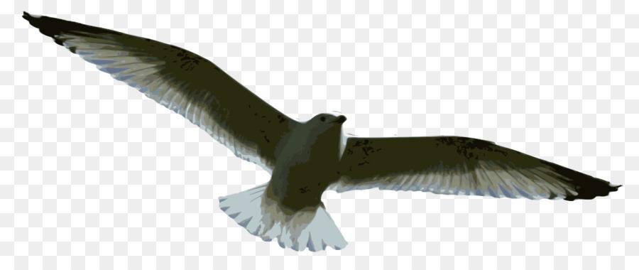 Descarga gratuita de Pájaro, Las Gaviotas, Vuelo Imágen de Png