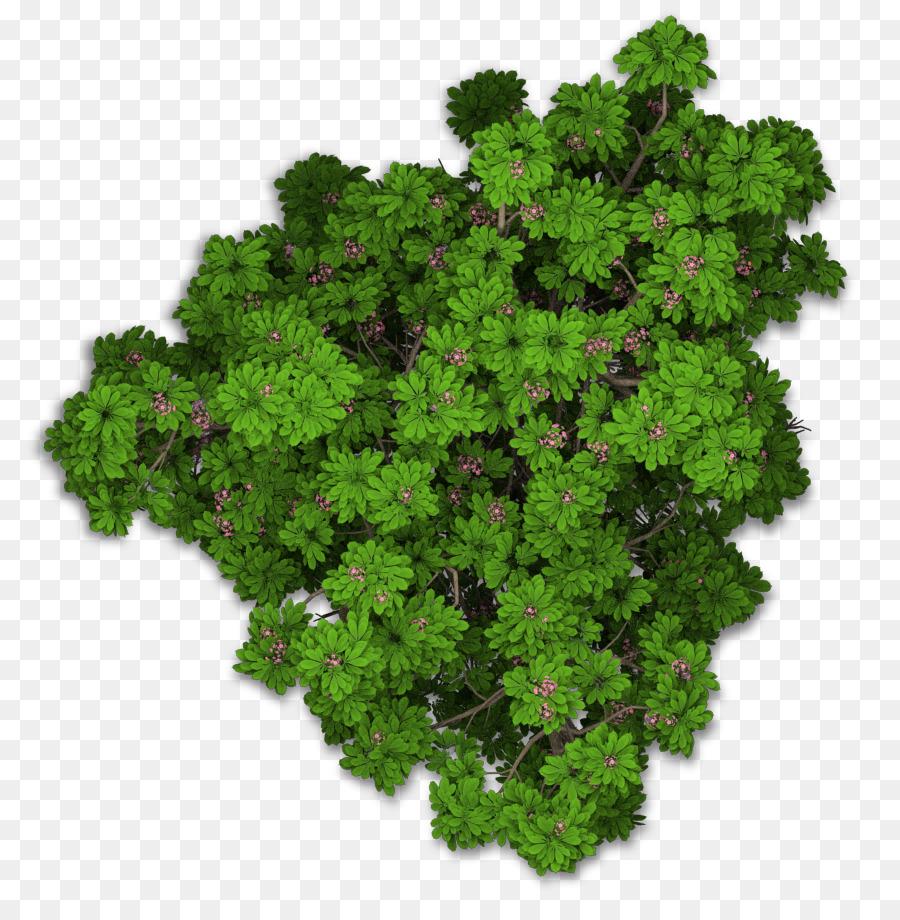 Descarga gratuita de Lacinato Col Rizada, Sweet Chestnut, Hoja Vegetal imágenes PNG