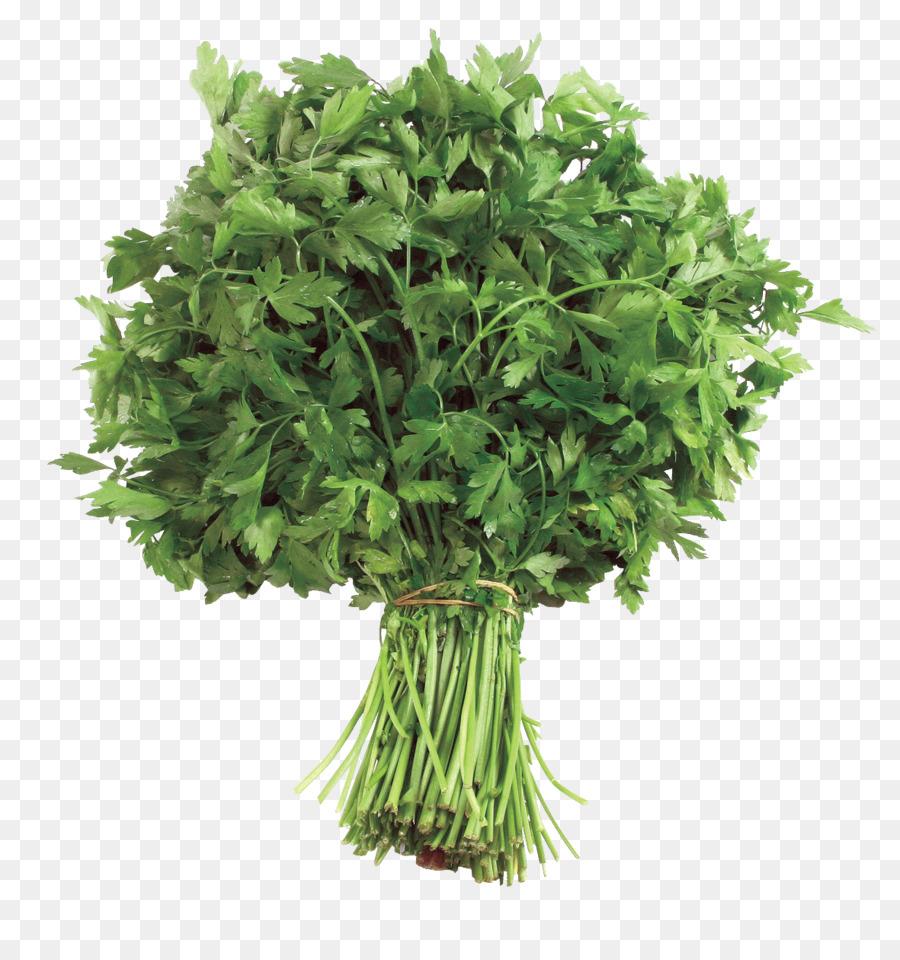 Descarga gratuita de Perejil, La Comida, Apiaceae imágenes PNG