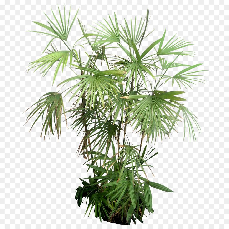 Descarga gratuita de Planta, árbol, Trópicos imágenes PNG