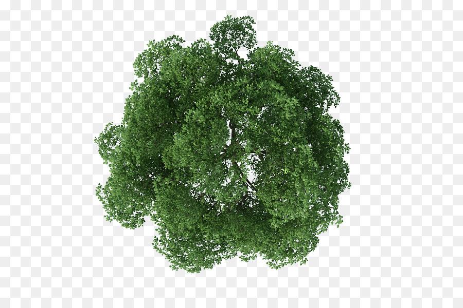 Descarga gratuita de árbol, La Representación, La Arquitectura Imágen de Png