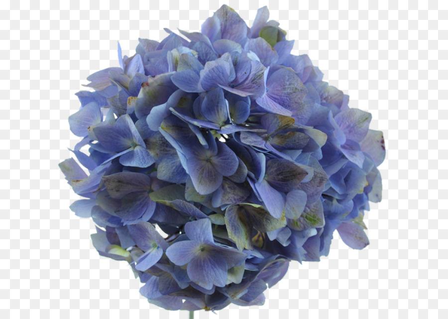 Descarga gratuita de Hortensia, Lavanda, Flor Imágen de Png