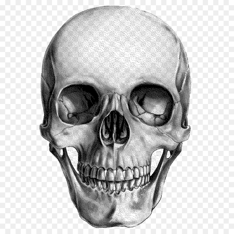 Descarga gratuita de Cráneo, Dibujo, Cráneo Humano Imágen de Png