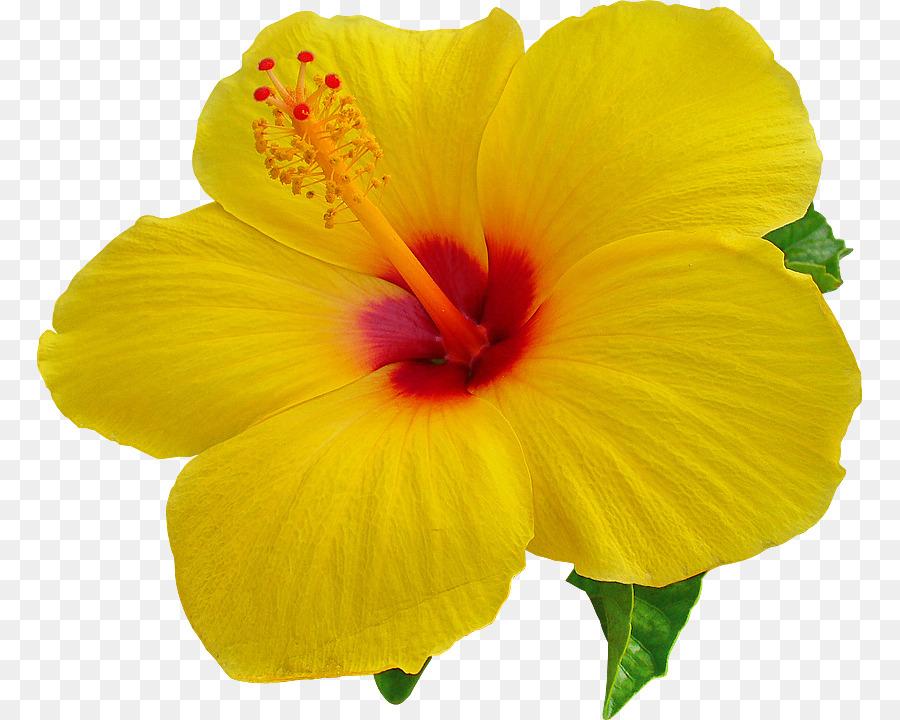 Descarga gratuita de Hawaii, Fondo De Escritorio, Hibiscus Imágen de Png