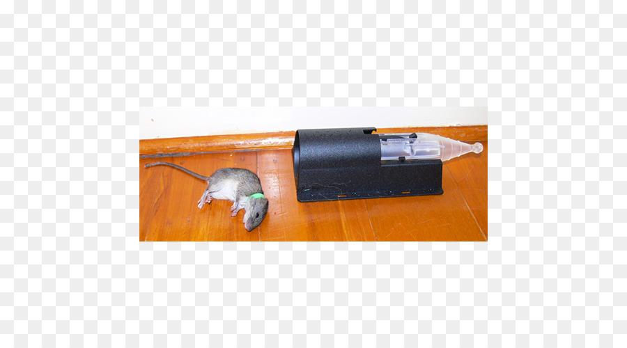 Descarga gratuita de Ratón, Rata, La Ratonera imágenes PNG