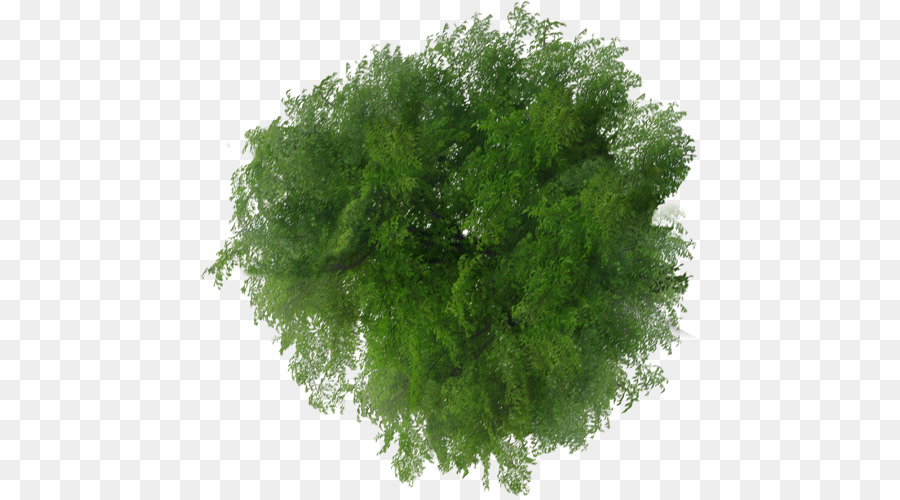 Descarga gratuita de árbol, Plan De, El Visor De Archivos Imágen de Png