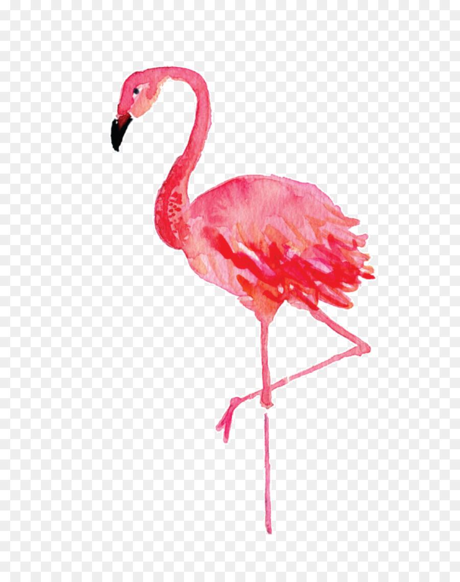 Descarga gratuita de En Stephenville, Flamingo, Pintura A La Acuarela Imágen de Png