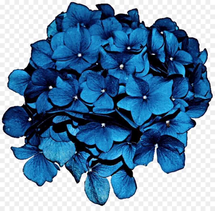 Descarga gratuita de Hortensia, Flor, Azul Imágen de Png