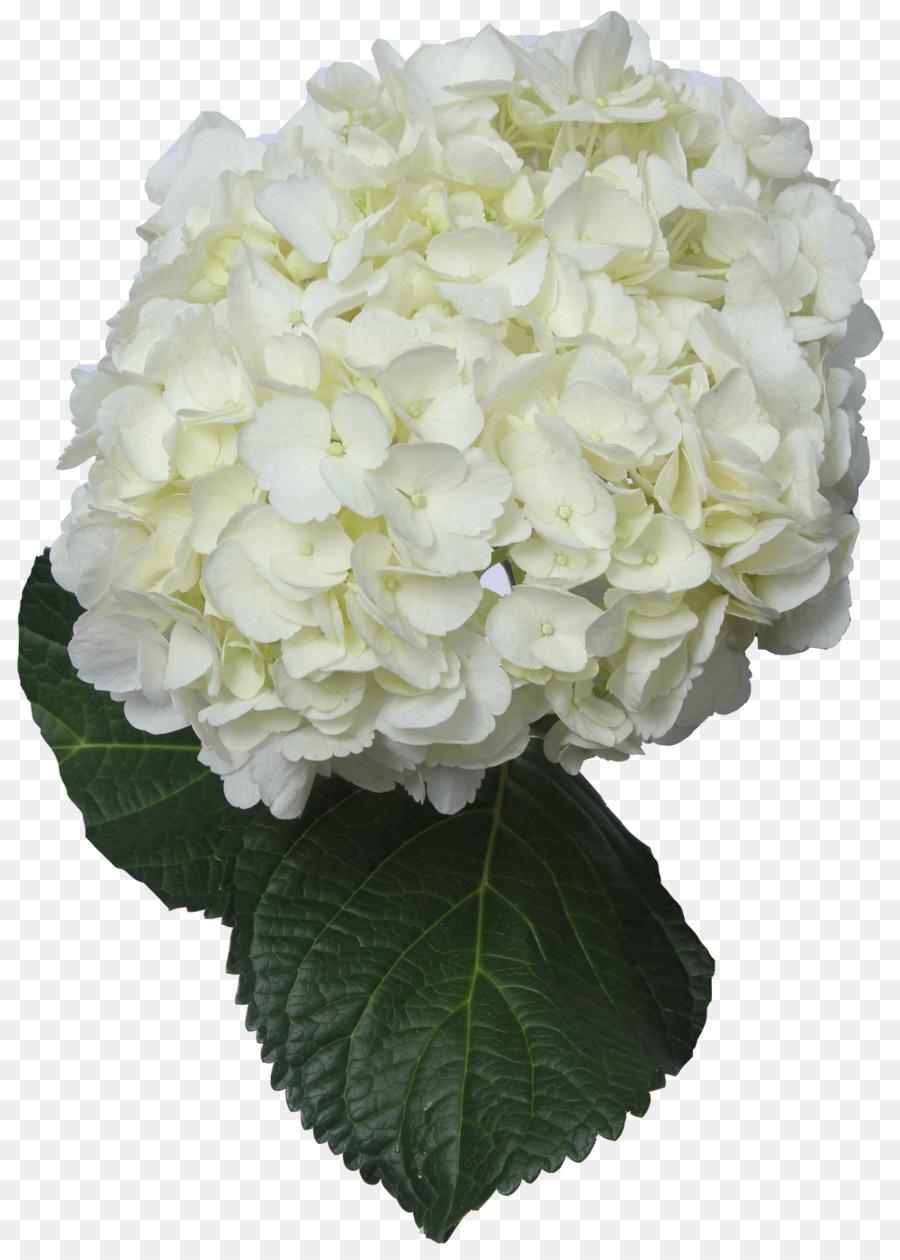 Descarga gratuita de Hortensia, Flor, Las Flores Cortadas Imágen de Png