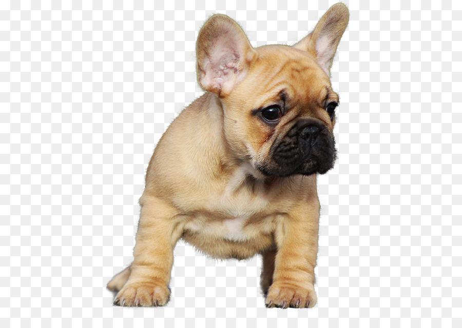 Descarga gratuita de Bulldog Francés, Bulldog, Staffordshire Bull Terrier imágenes PNG