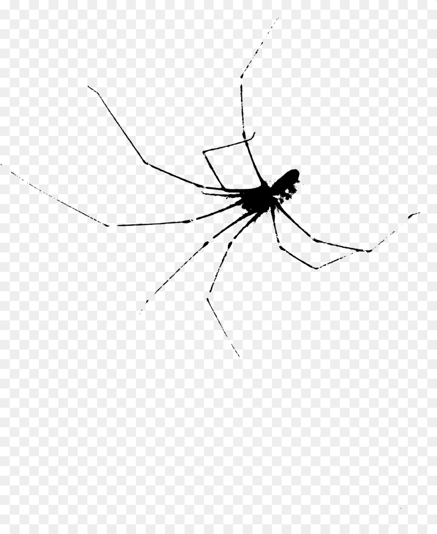 Descarga gratuita de Araña, Arañas De La Viuda, Mosquito Imágen de Png
