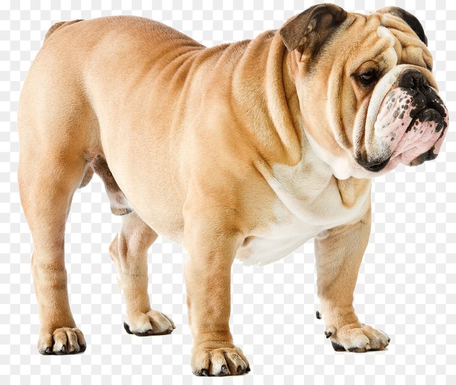 Descarga gratuita de Bulldog, Bulldog Francés, Rhodesian Ridgeback Imágen de Png
